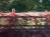 ASEAB-Pascale Evain-Course d'automne