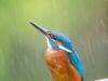 6-la fleche bleu