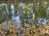 ondes d_automne-light