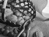 ASEAB_EVAIN_FruitsACoques