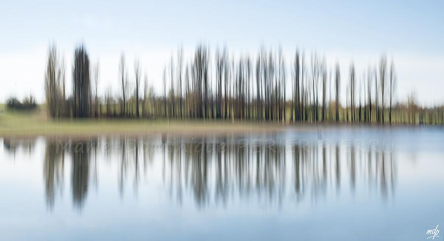 flou-arbres-valdo